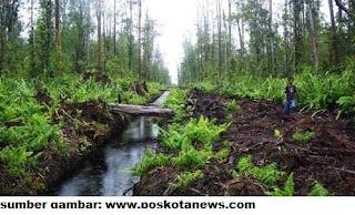 lahan rawa pasang surut untuk pengembangan pertanian