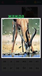олень подошел к воде, его замучила жажда