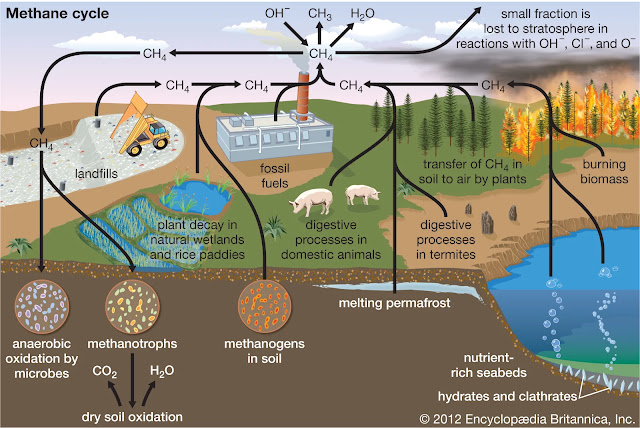 Methane Cycle Diagram
