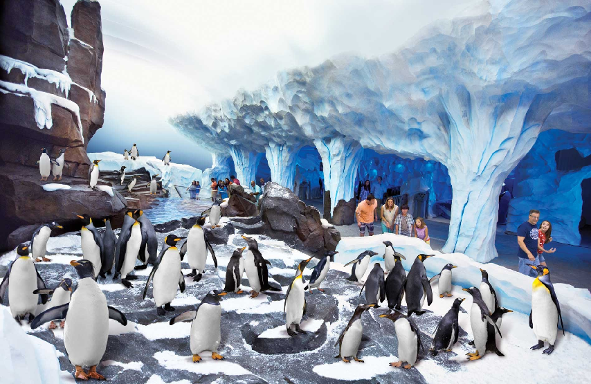 Antartica: World of Penguin no Sea World em Orlando