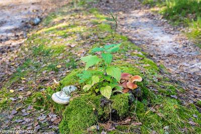 Leśna kompozycja roślinna
