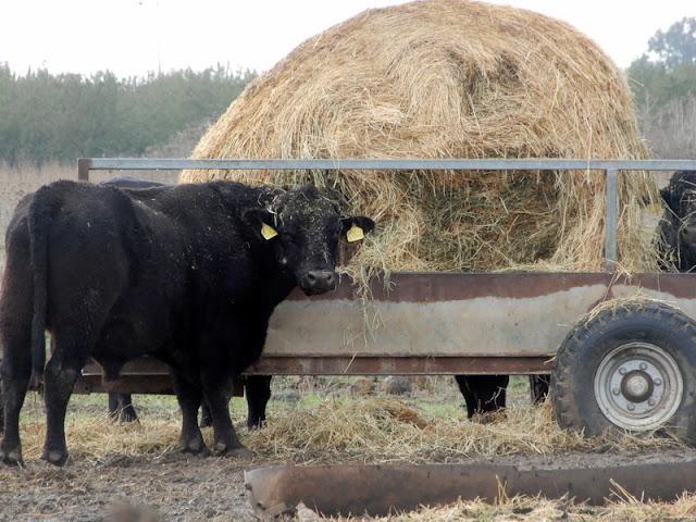 חקלאות ברמת הגולן