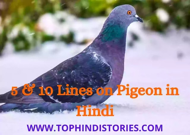 5 & 10 Lines on Pigeon in Hindi [Few Points & Sentences]