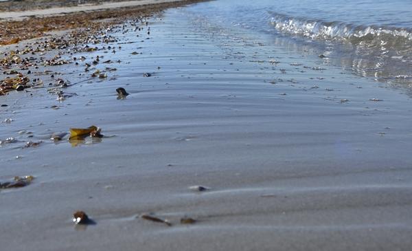 bølge sandstrand