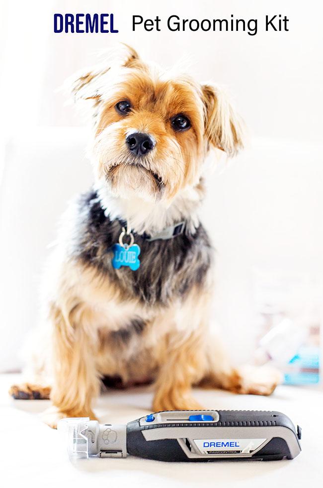 Yorkshire Terrier -Louie- and Dremel PawControl Pet grooming kit