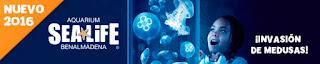 Invasión de medusas Sea Life Benalmádena