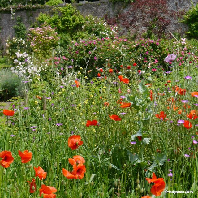 https://riedgarten.blogspot.de/2016/06/gartentage-in-kasteel-hex.html