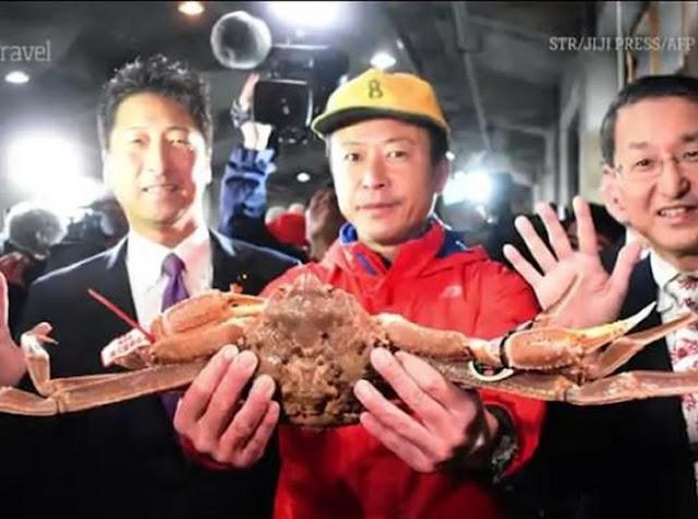 Ini Kepiting Jepang Termahal yang Harganya Setara Mobil Mewah!