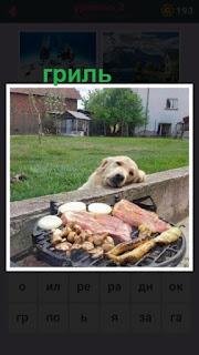 655 слов на гриле жарится мясо и рядом собака смотрит 2 уровень