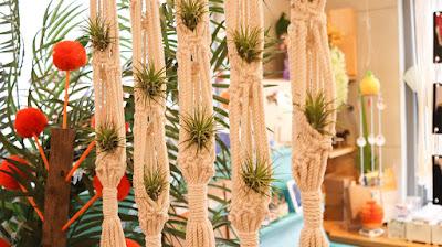 Tillandsia cultivada como planta de interior