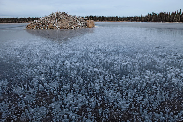 Worldwide increase in methane bubbles due to climate change