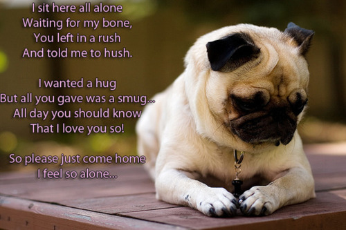pug poems puggyluvvy 9071