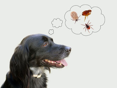 Fleas - 6 Primary Reasons for Skin Problem in Dogs | Budget Pet World