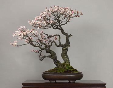 Estetika bonsajov / Všeobecný úvod II.