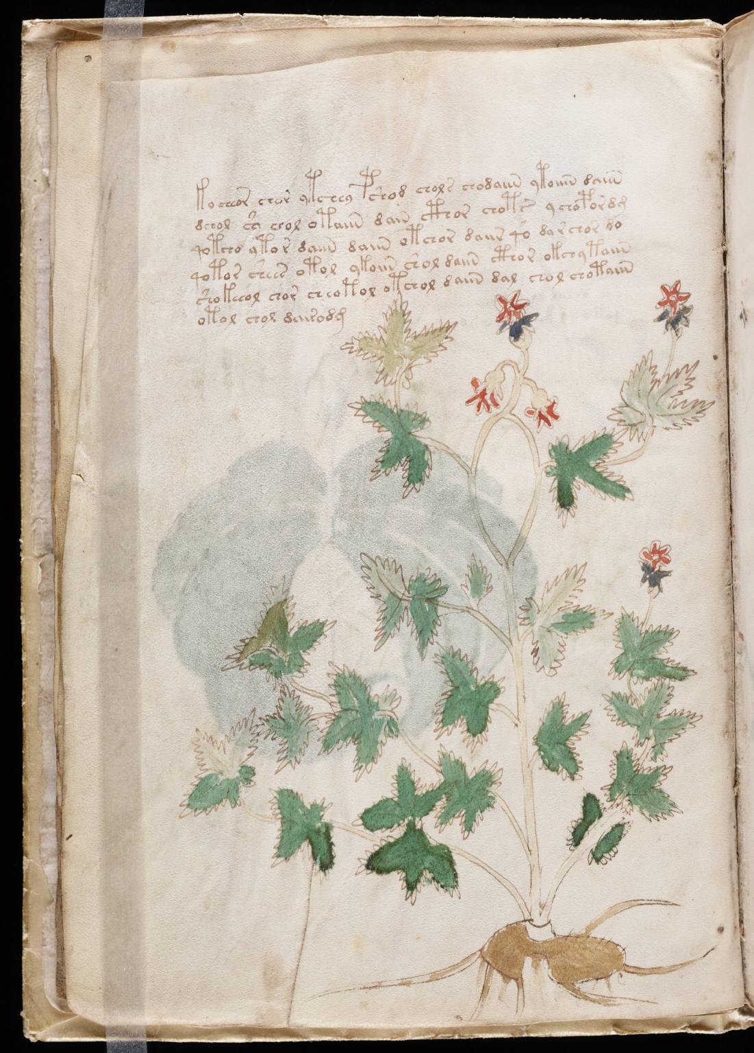 manuscrito012
