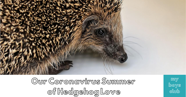 hedgehogs uk garden