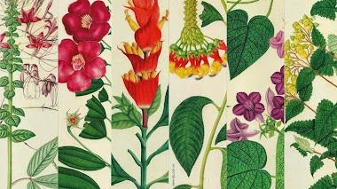 Regalos botánicos. Marcapáginas botánicos