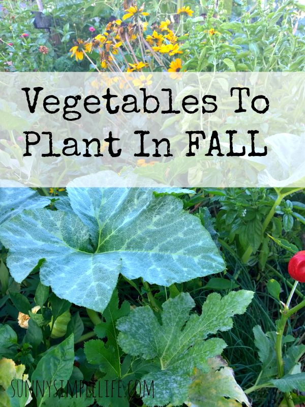 What vegetables to to plant in the fall