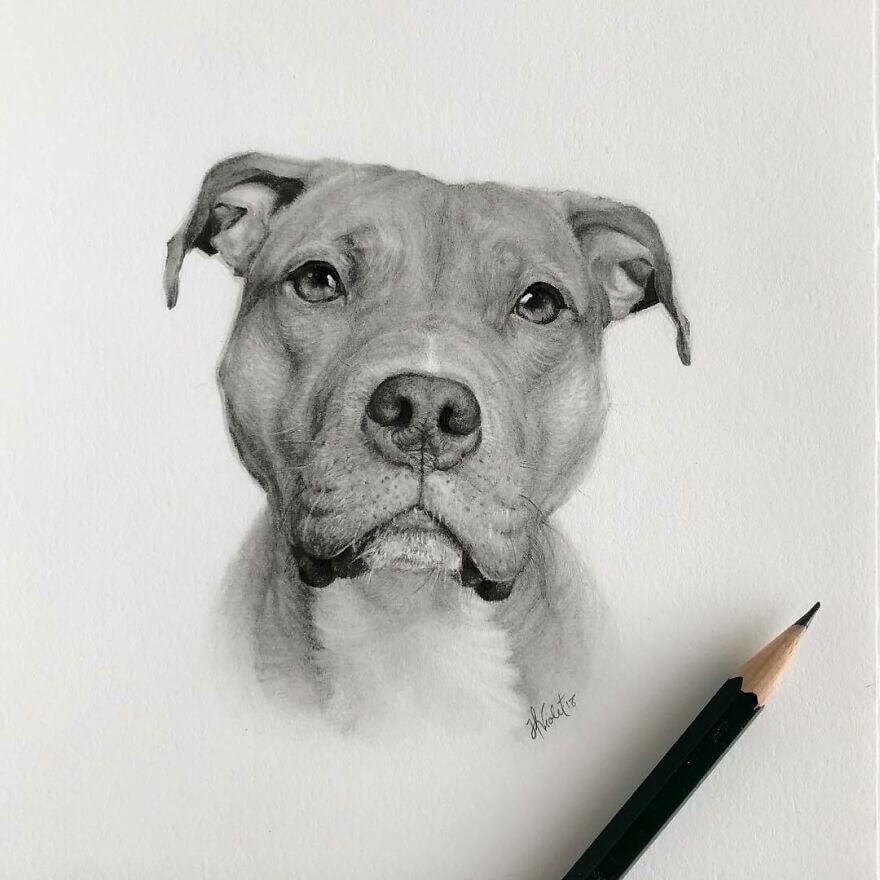 09-Pit-Bull-Terrier-Detailing-Helen-Violet-www-designstack-co