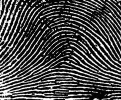 Arch Fingerprint Pattern