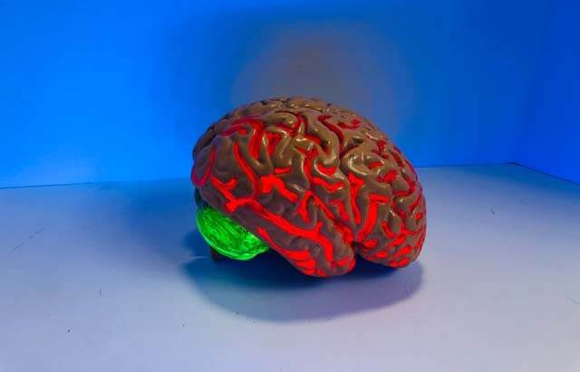 Nossos cerebros mudam de tamanho