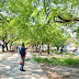 La Municipalidad ejecuta el programa de poda correctiva de árboles