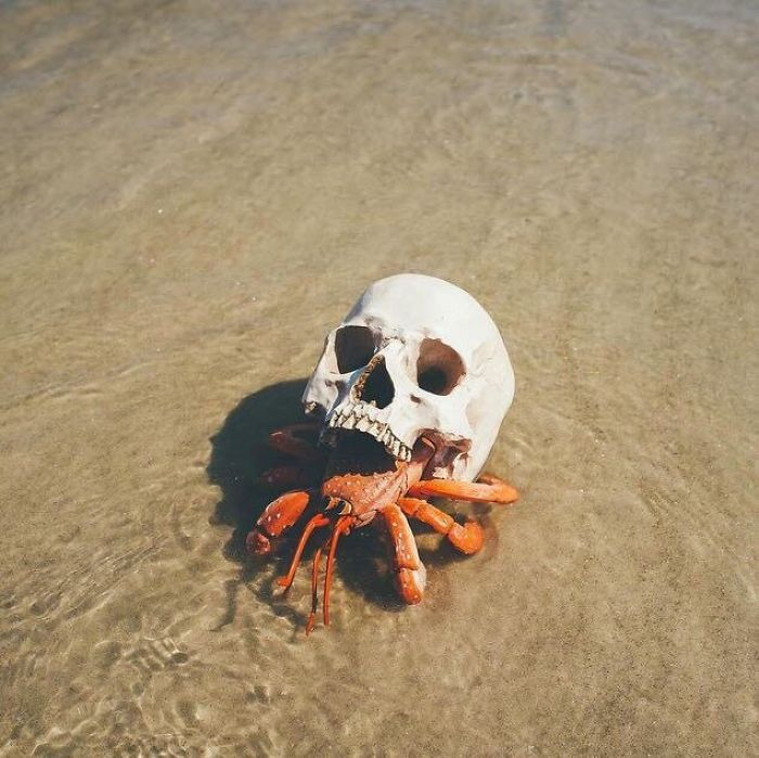 36 Unbelievable Pictures That Are Not Photoshopped - Hermit Crab Using A Skull For A Shell