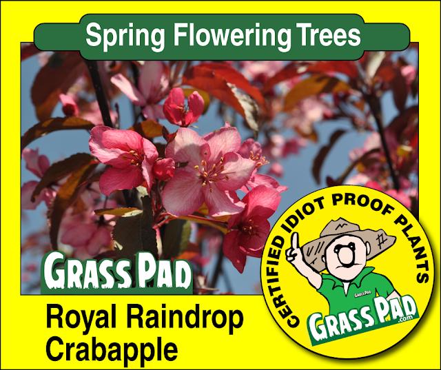 Royal Raindrop Crabapple