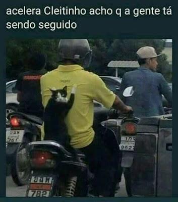 gato na moto