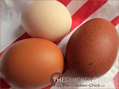 Salmonella from shell eggs is transmitted to people primarily as the result of an egg yolk that was infected with Salmonella enteritidis inside the hen's ovary, not on the eggshell.