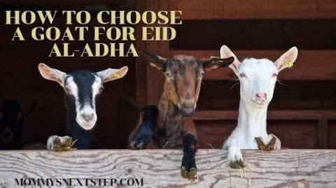 Eid al-Adha, We Chose Our Own Goat for Qurban