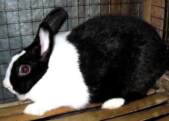 Contoh Descriptive Text About Rabbit Terbaru Dan Artinya