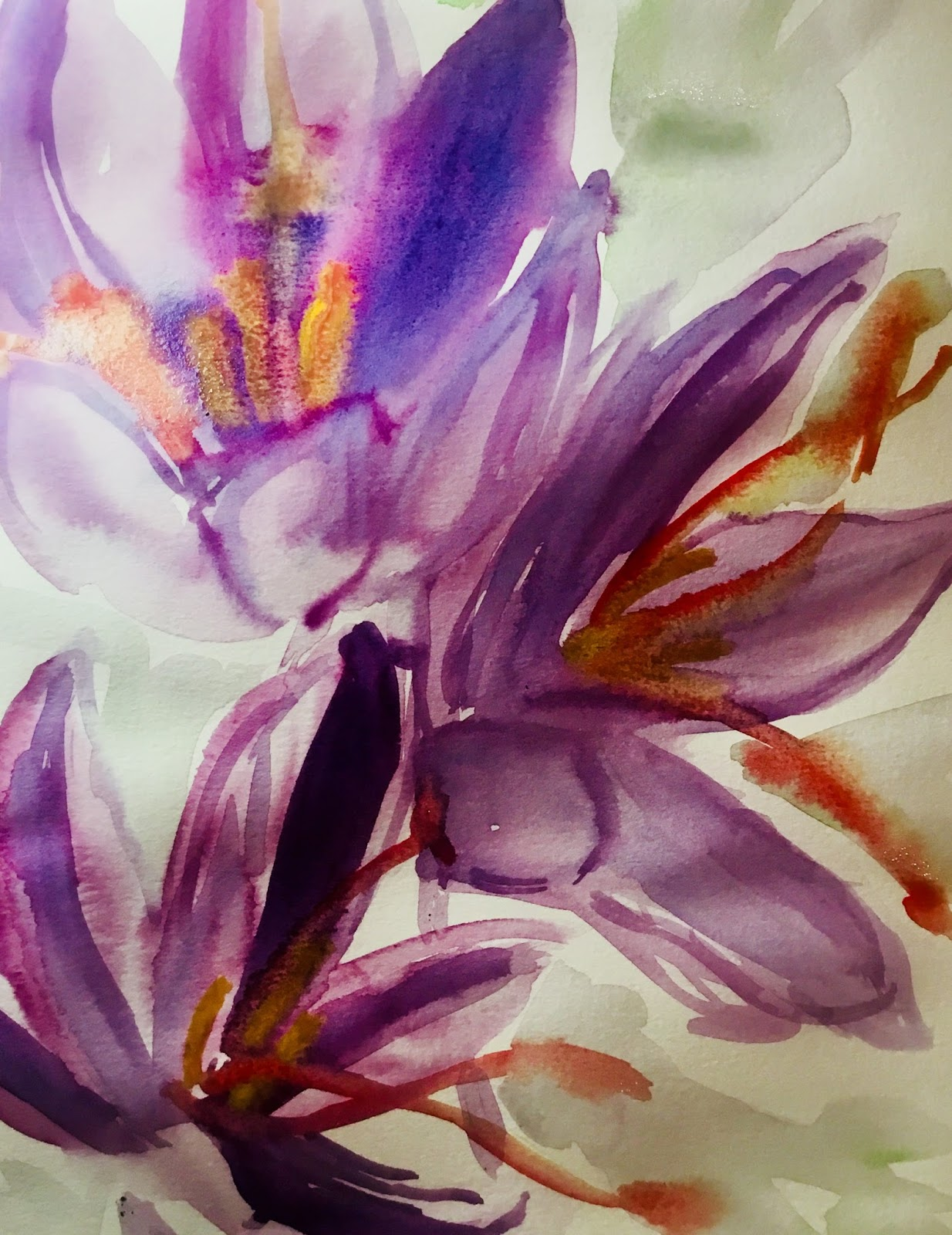 watercolour sketch of crocus flowers, used to produce saffron