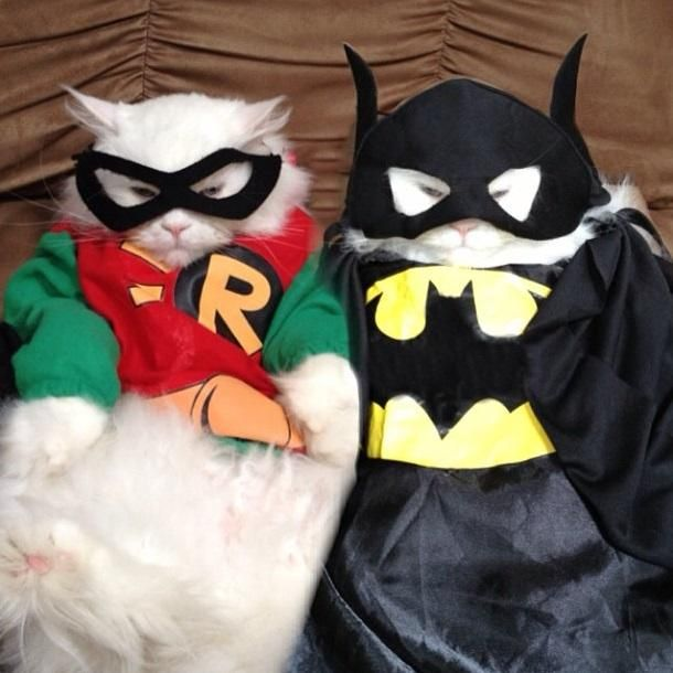 Batman and Robin cat costume pictures