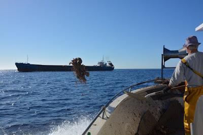 Pescaturismo Mallorca Preocupa el estado del Mediterráneo