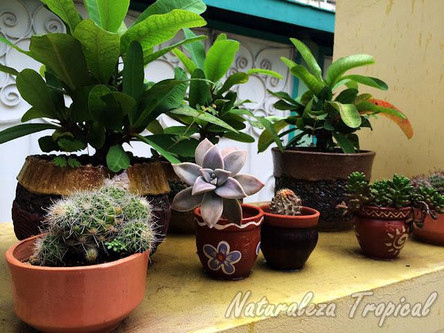 Mini-colección de plantas crasas y cactus