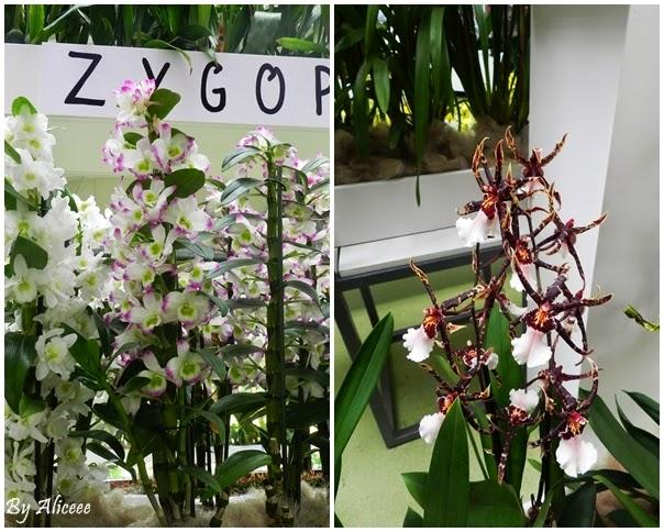 colaj-orhidee