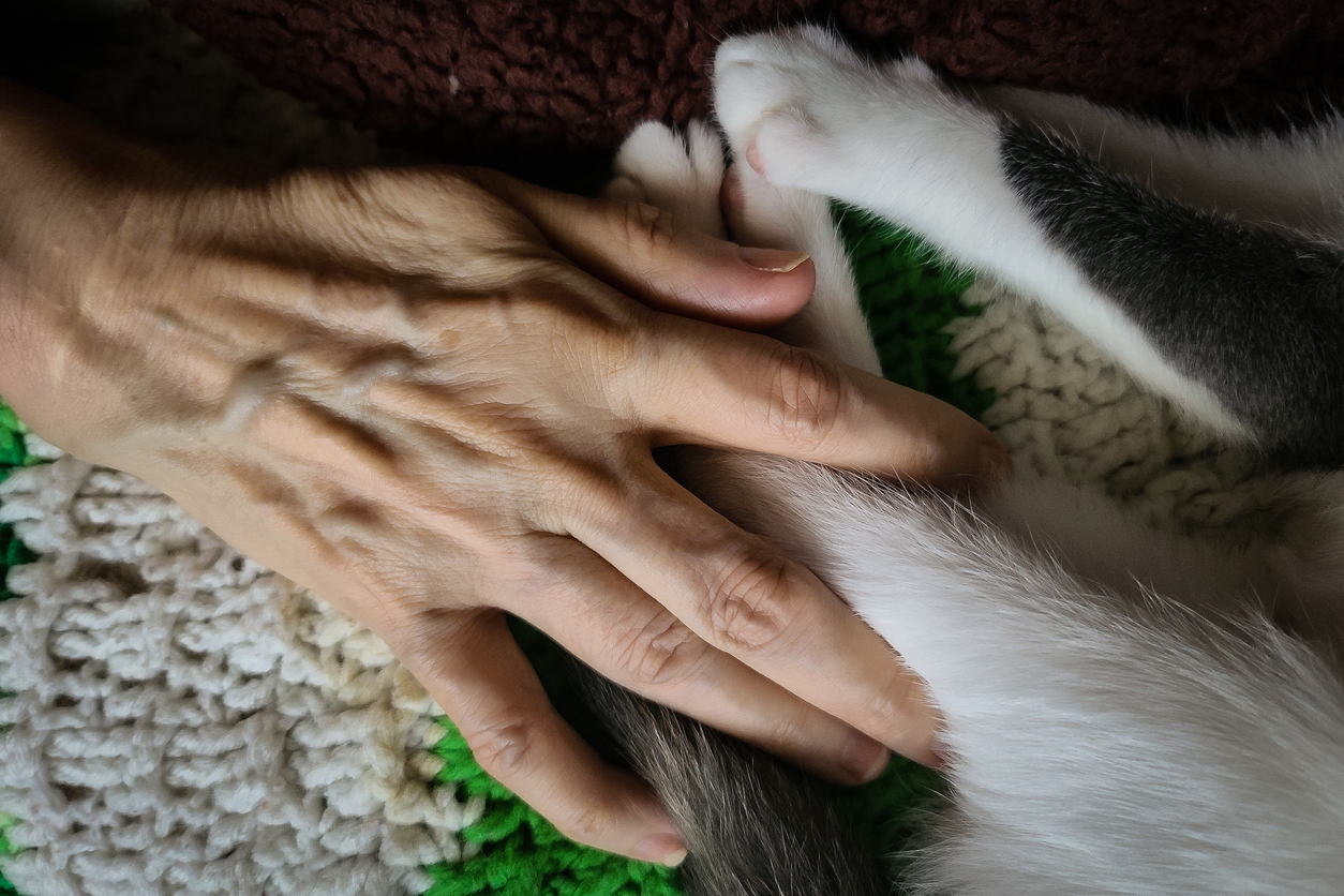 cat paws, older lady