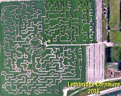 Lethbridge Corn Maze