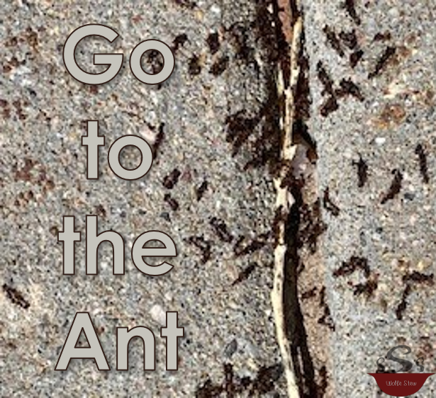 Background of ants on a sidewalk