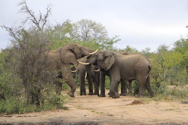 Elefantes en el Parque Kruger, Sudáfrica