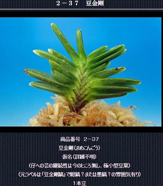 http://www.fuuran.jp/2-37.html