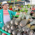 Festival do Abacaxi reúne show, gastronomia e workshops, na Capital