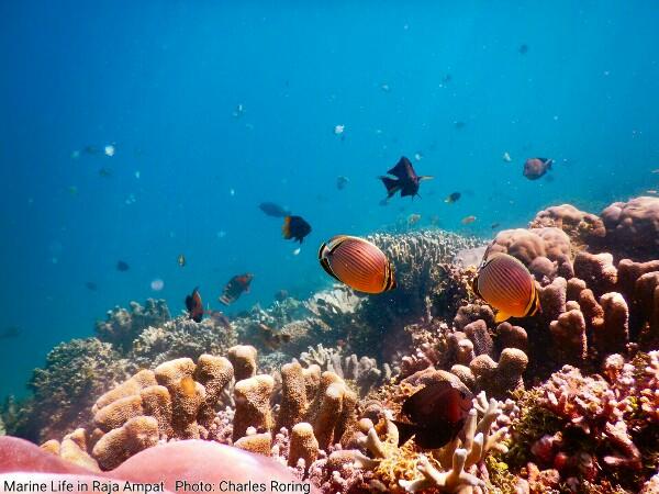 Foto bawah laut terumbu karang dan ikan di Pulau Waigeo