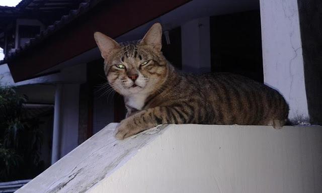 Kumel kucing kesayangan kresnoadi telah tiada