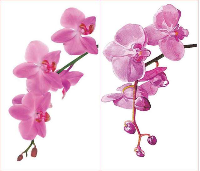 lukisan-bunga-anggrek