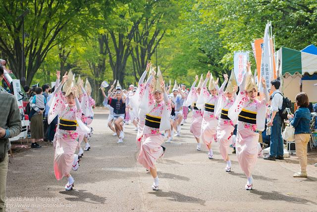 紅連、阿波踊りの流し踊りで女踊りを正面から撮影した写真
