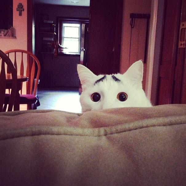 صور قطط,صور عن القطط,قطط مضحكة ,قطط جميلة ,قطط كيوت,القط ذو الحواجب