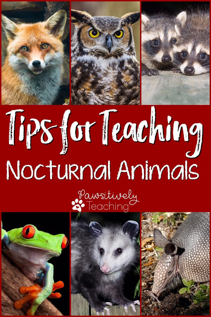 Whether you already teach about Nocturnal Animals or you're just thinking about covering it this year, I'm here to save you some planning & prep time on a unit your kids will love!! In this one post, you'll find tons of creative ideas and resources for an awesome & engaging unit!