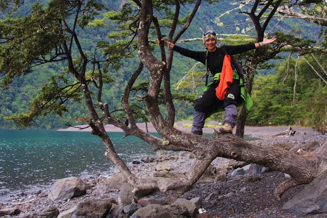 Parque Nacional VICENTE PEREZ ROSALES e lago Nuapi Huapi   Chile